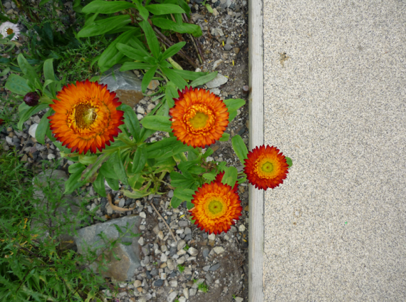Flowers & Path