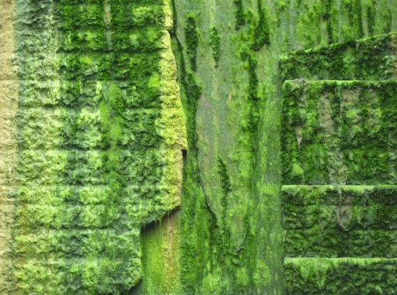 Slime Wall 1