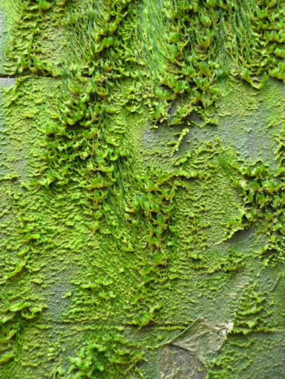 Slime Wall 2